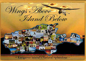 wings_above_island